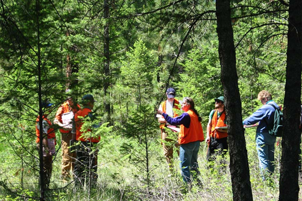 Forest Recruitment
