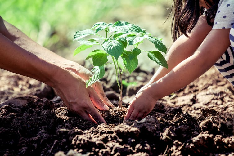 planting and weather