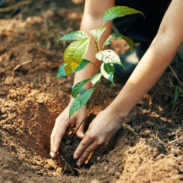 Tree Plant-1