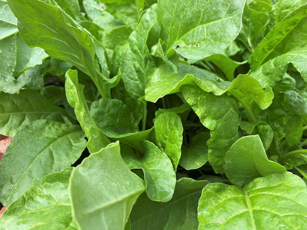 palong and vegitable